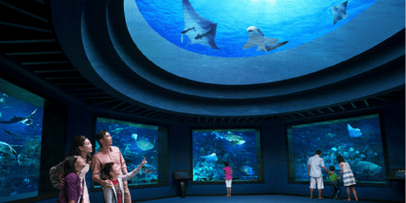 Singapore S.E.A Aquarium Entrance ticket by muslimcuti