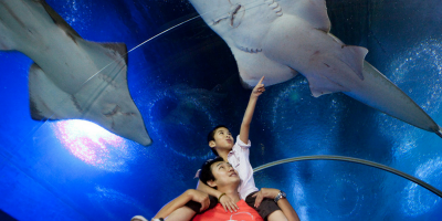 Pattaya Underwater World Ticket by muslimcuti