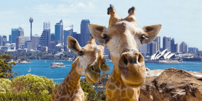 Australia Sydney Taronga Zoo Ticket by muslimcuti