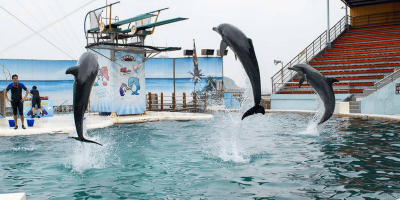 Taiwan Yehliu Ocean World Entrance Pass by muslimcuti
