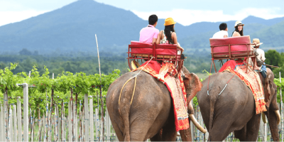 Thailand Hua Hin Elephant Riding & Show Entrance Pass by muslimcuti