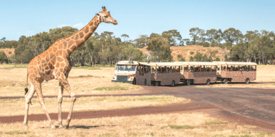 Melbourne Werribee Open Range Zoo ticket by muslimcuti