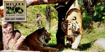 Melaka Zoo & Night Safari Ticket by muslimcuti